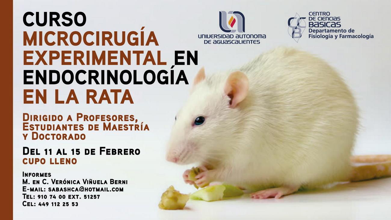 Cursos de Microcirugía Experimental en Endocrinología en la Rata