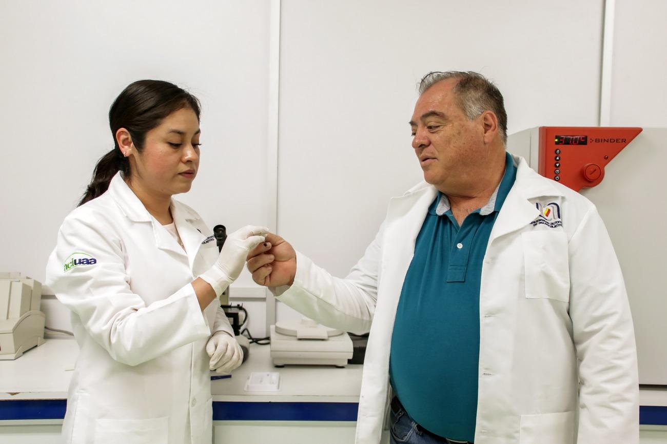 UAA desarrolla investigación sobre trastornos metabólicos en ganado lechero