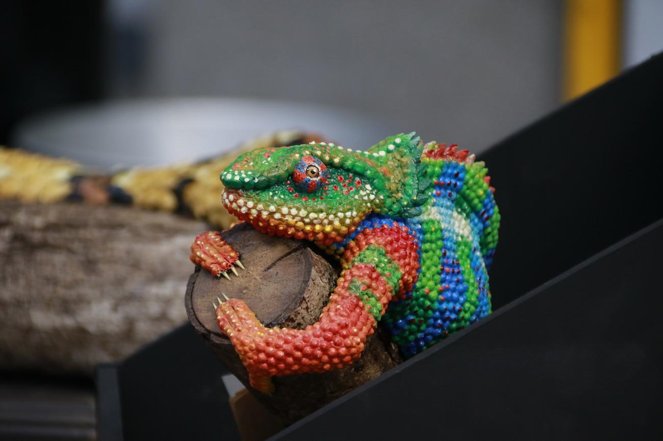 UAA congrega más de 150 especialistas en el estudio de vipéridos y efectos de la mordedura de serpientes venenosas