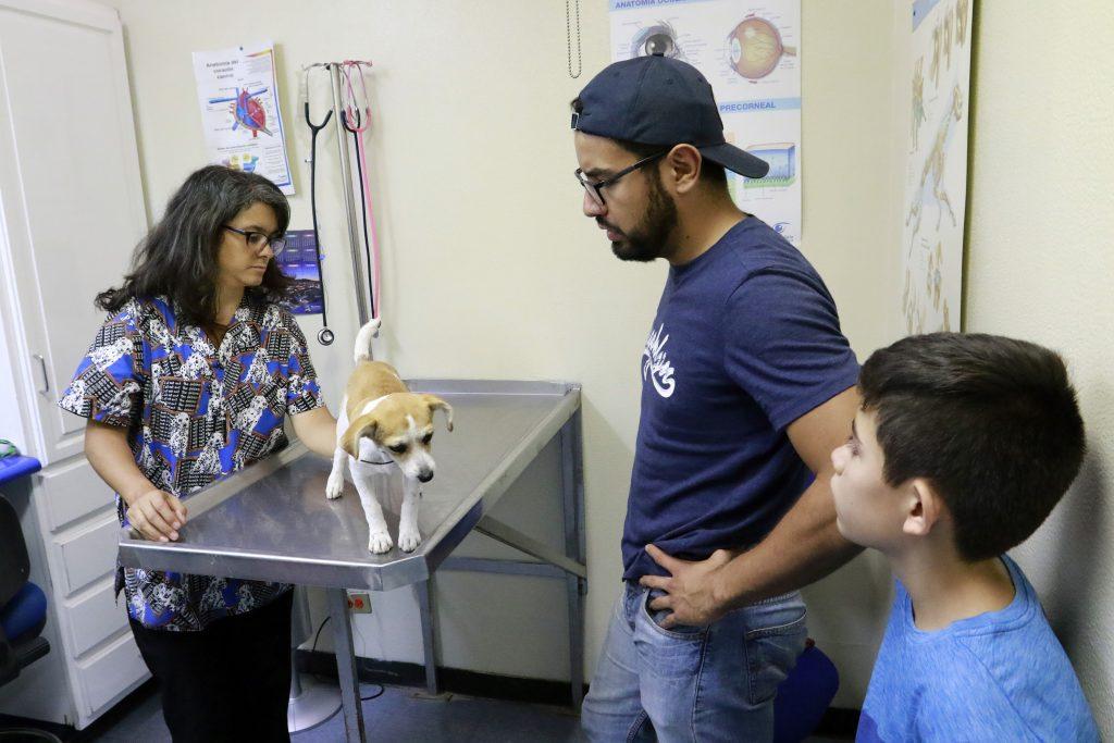 UAA ofrece a la población el servicio de esterilización canina y felina en su Hospital Veterinario