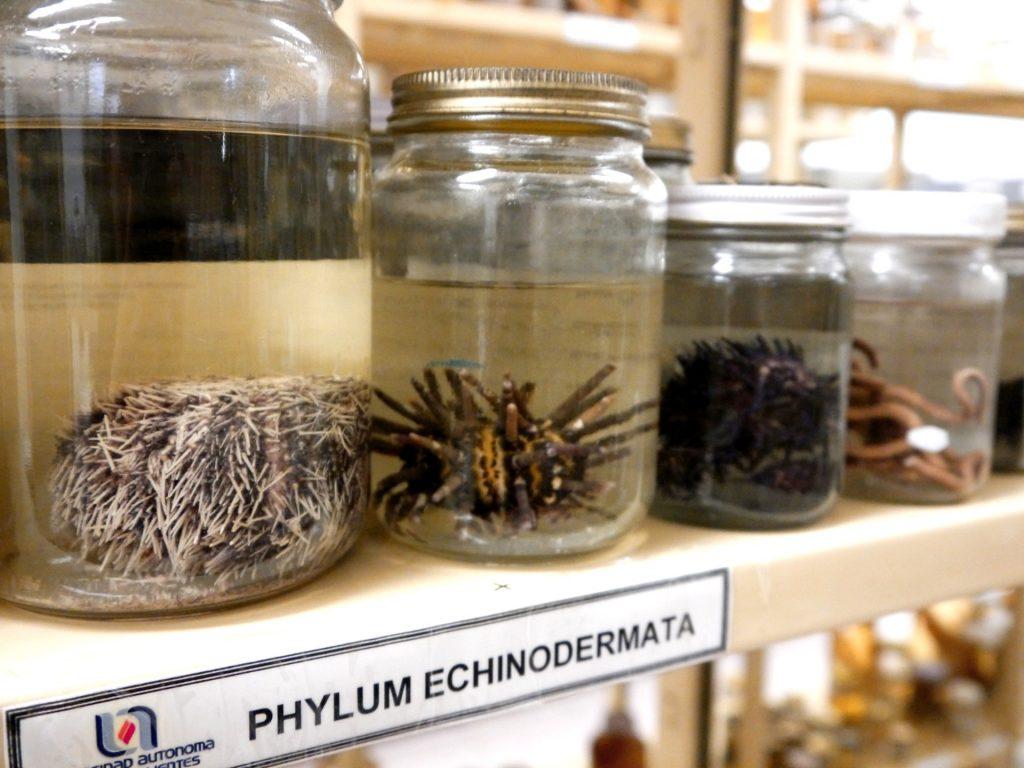 Alrededor de 40 mil ejemplares conforman la Colección Zoológica de la UAA
