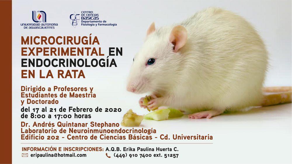 Microcirugía Experimental en la Endocrinología en la Rata