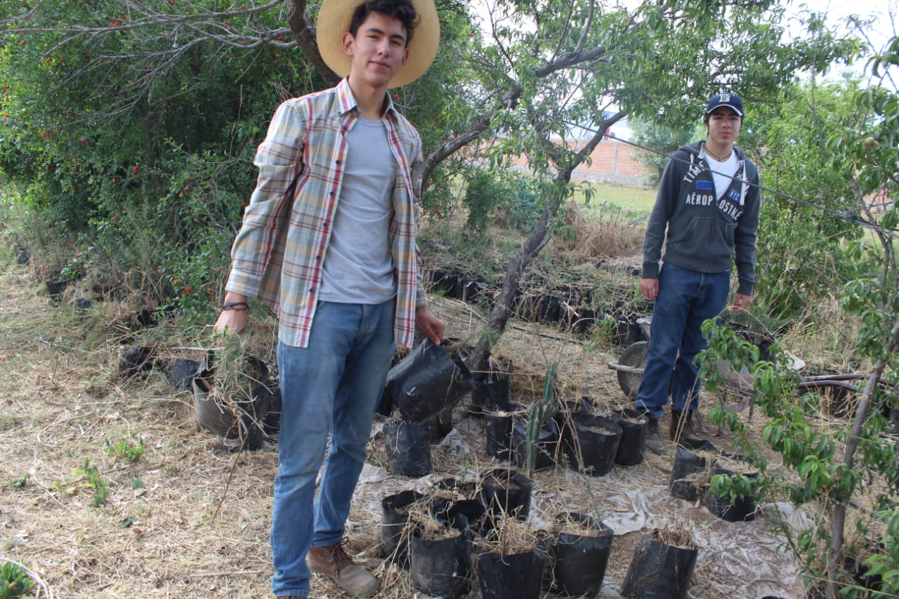 Reforestación especies nativas