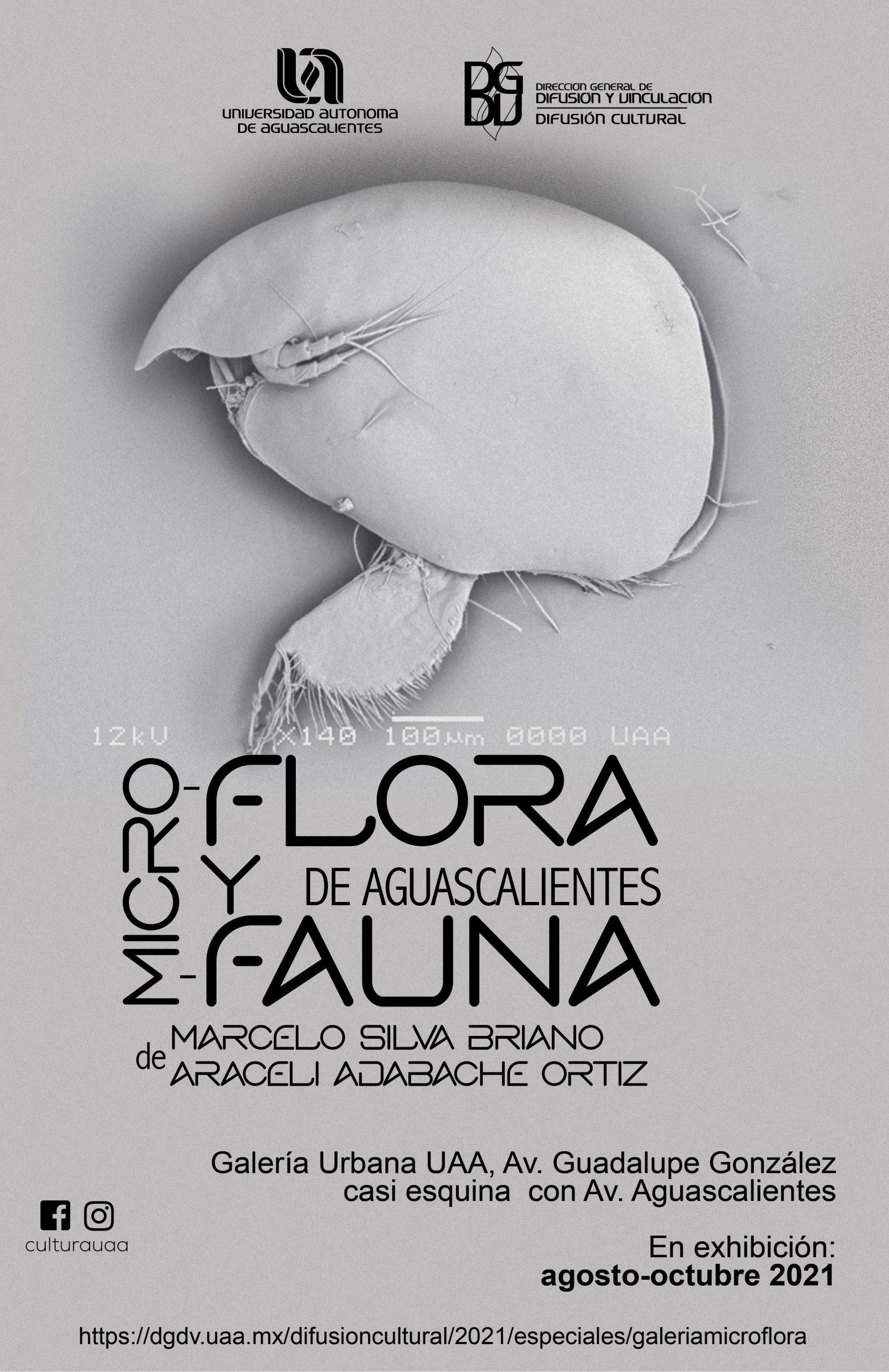 "Galería Urbana ""Micro flora y micro fauna de Aguascalientes"""