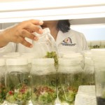 Se Discutirán 247 Proyectos Durante el Doceavo Seminario de Investigación de la UAA
