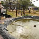 UAA Propone la Producción Acuícola en la Entidad Como una Actividad Adicional y Rentable para los Agricultores
