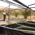 Investigación UAA sobre rescate y reproducción de peces nativos del estado