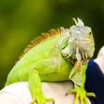 UAA será sede del XXI Congreso Nacional de Zoología