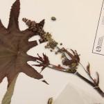 UAA con apoyo de la CONABIO realiza investigación sobre la flora dicotiledonea en la entidad