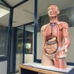 Los genes nod1 y nod2 influyen en el desarrollo de enfermedades gastrointestinales