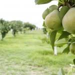 Se realizará en la UAA el XIII simposio de Agricultura Sostenible