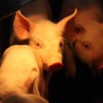 UAA estudia afecciones en el estado a causa de biopelículas en el ambiente