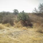 UAA reunirá a expertos en investigaciones sobre pastizales nativos en México