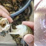 Investigación de la UAA retarda deterioro de fresa, guayaba y chile con recubrimiento comestible