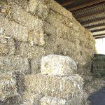 UAA pone en marcha proyecto para control de micotoxinas en ensilaje de maíz mediante una opción natural