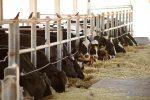 Investigación de la UAA evalúa impacto de la calidad de la leche en la rentabilidad de sus unidades lecheras