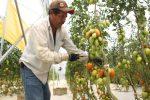 El 30 por ciento de las hortalizas y frutas en México se pierden por falta de estrategias de comercialización