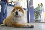 Cerca de dos mil consultas ha realizado el hospital veterinario de pequeñas especies de la UAA